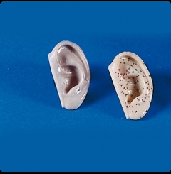 Modelo de orelhas, tam. real - conj. 2 itens