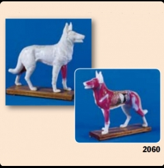Modelo de figura canina de acupunctura
