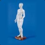 Figura feminina de acupunctura chinesa
