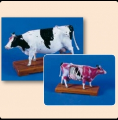 Modelo bovino de acupunctura