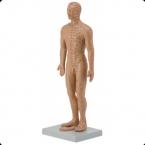 Modelo de acupunctura