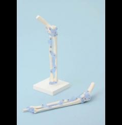 Articulação do cotovelo com ligamentos (com suporte)