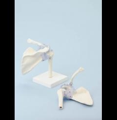 Articulação do ombro com ligamentos (sem suporte)