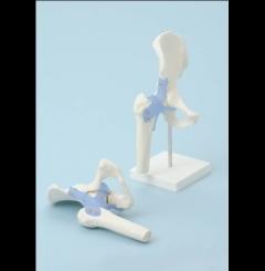 Articulação do quadril com ligamentos (sem suporte)