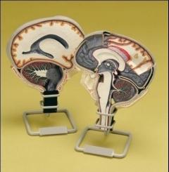 Circulação de fluído cerebrospinal