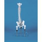 Coluna vertebral - demonstração de postura incorrecta