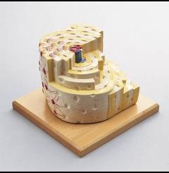 Modelo da estrutura óssea - 500x tam. real