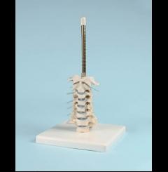 Suporte p/crânio e coluna cervical