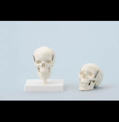 Crânio em miniatura - 3 partes (s/suporte)
