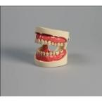 Modelo de cuidados dentífricos c/dentes separados