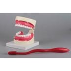 Modelo de higiene oral