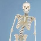 """Esqueleto """"Hugo"""""""