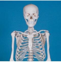 """Esqueleto """"Ben"""" - para Escolas"""