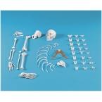 Metade de esqueleto desmontado (colecção de ossos)