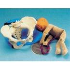Pélvis feminina c/boneca simuladora de feto