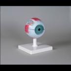 Modelo de olho, 4x tam. real - 6 partes