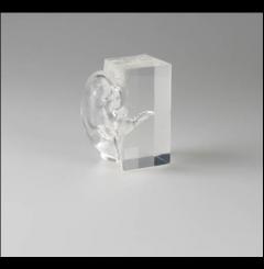 Modelo transparente de um ouvido