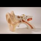 Ouvido c/demonstração de equilíbrio - 3 partes