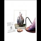 Modelo de pulmão de fumador