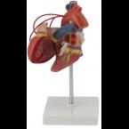 Coração c/bypass