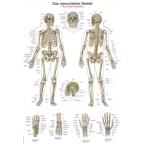 Quadro do esqueleto (50 x 70)
