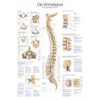 Quadro da coluna vertebral (50 x 70)
