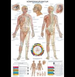 Quadro do corpo de acupunctura (70 x 100)
