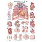 Quadro do coração (50 x 70)