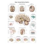 Quadro do cérebro (50 x 70)