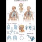 Quadro do sistema respiratório (50 x 70)