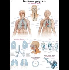 Quadro do sistema respiratório (70 x 100)