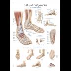 Quadro do pé e tornozelo (50 x 70)