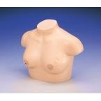 Modelo de apalpação para detecção de cancro mama