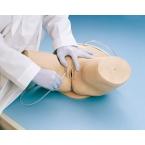 Simulador de cateterismo, feminino