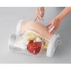 Modelo da anatomia do quadril/técnica de injecção intramuscular