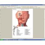 Guia do torso em CD-ROM