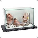 Arte Anatómica