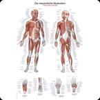 Quadros Anatómicos